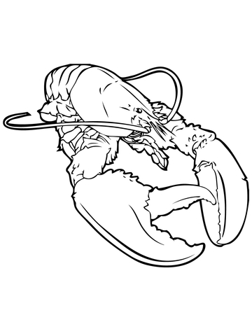360x480 Realistic Lobster Coloring Page Free Printable Coloring Pages