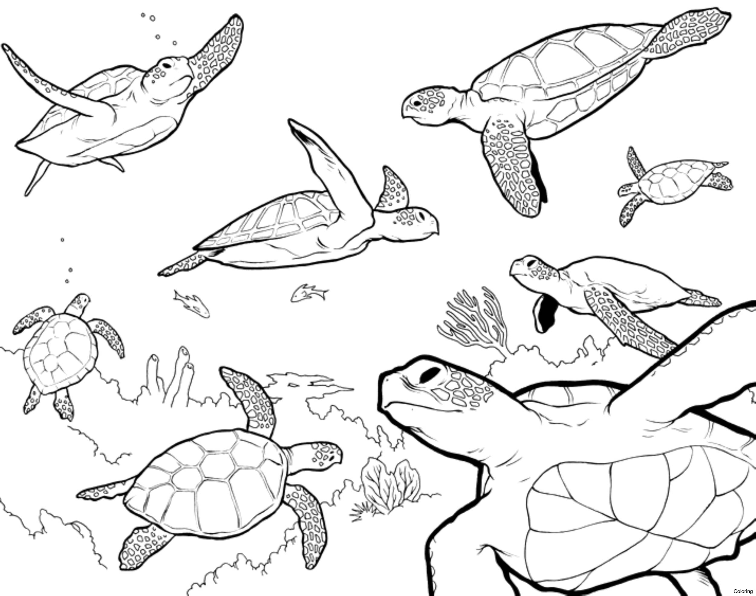 2500x1969 Loggerhead Turtle Coloring Page Sea 1f Baby Pages Hawksbill Diaiz
