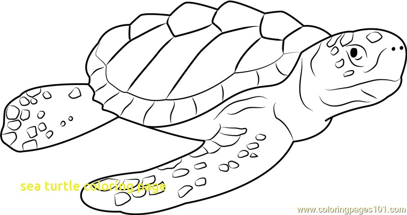 800x423 Sea Turtle Coloring Page With Drawn Sea Turtle Turtle Swimming