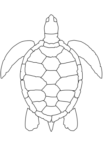339x480 Sea Turtle Coloring Page Free Printable Pages
