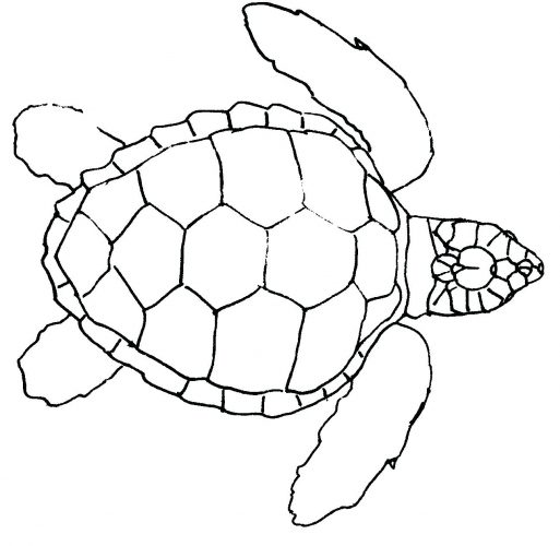 513x500 Zachrme Page 44 Monster Truck Coloring Pages Sea Turtle