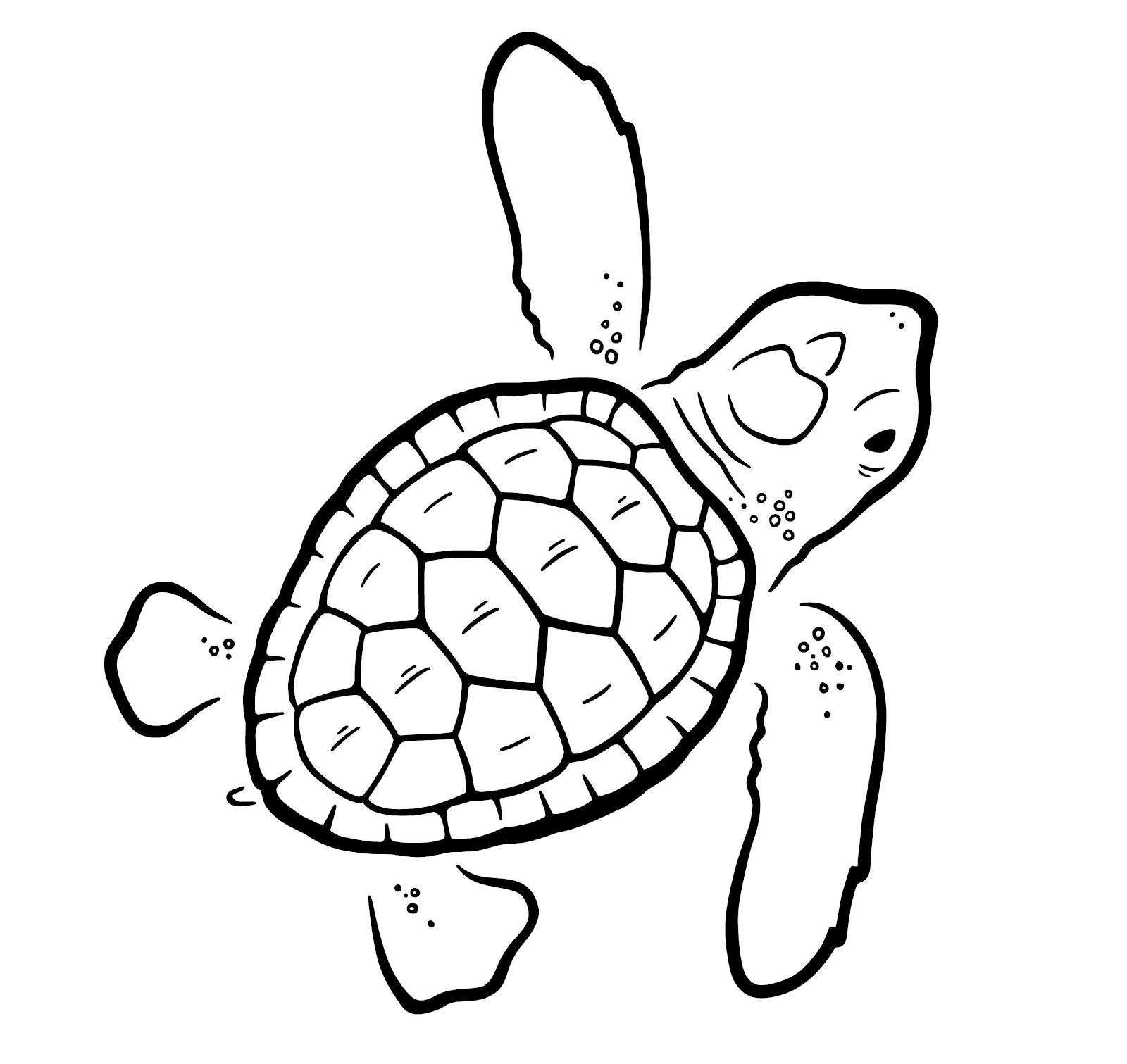 Loggerhead Turtle Drawing