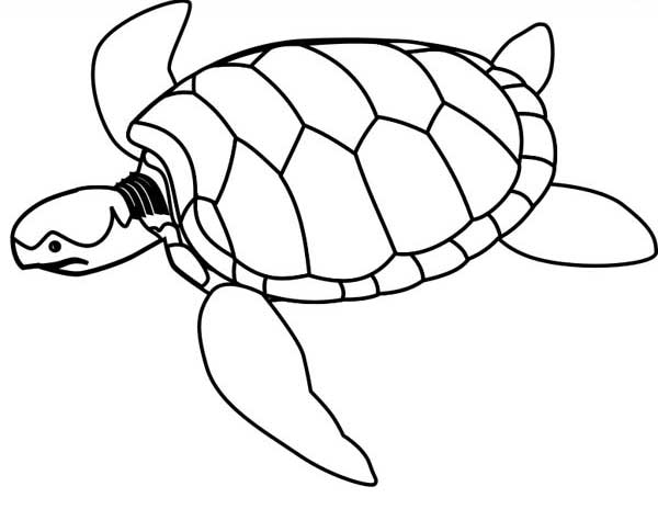 600x464 Sea Turtle Endangered Coloring Page