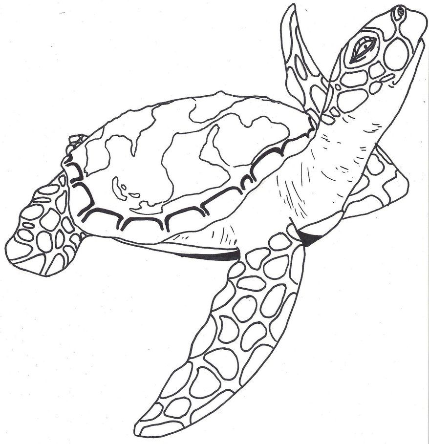 878x909 Simple Sea Turtle Drawing Turtle Outline Sea Turtle By Paxnyx