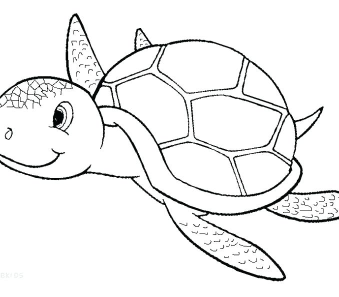 678x594 Coloring Pages Of Sea Turtles Turtle