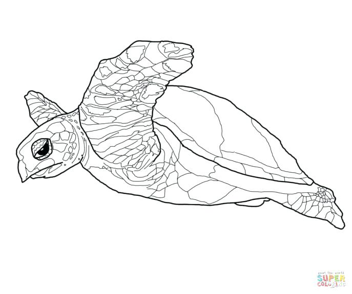 687x575 Coloring Pages Of Sea Turtles Sea Turtle Coloring Sheet Sea Turtle