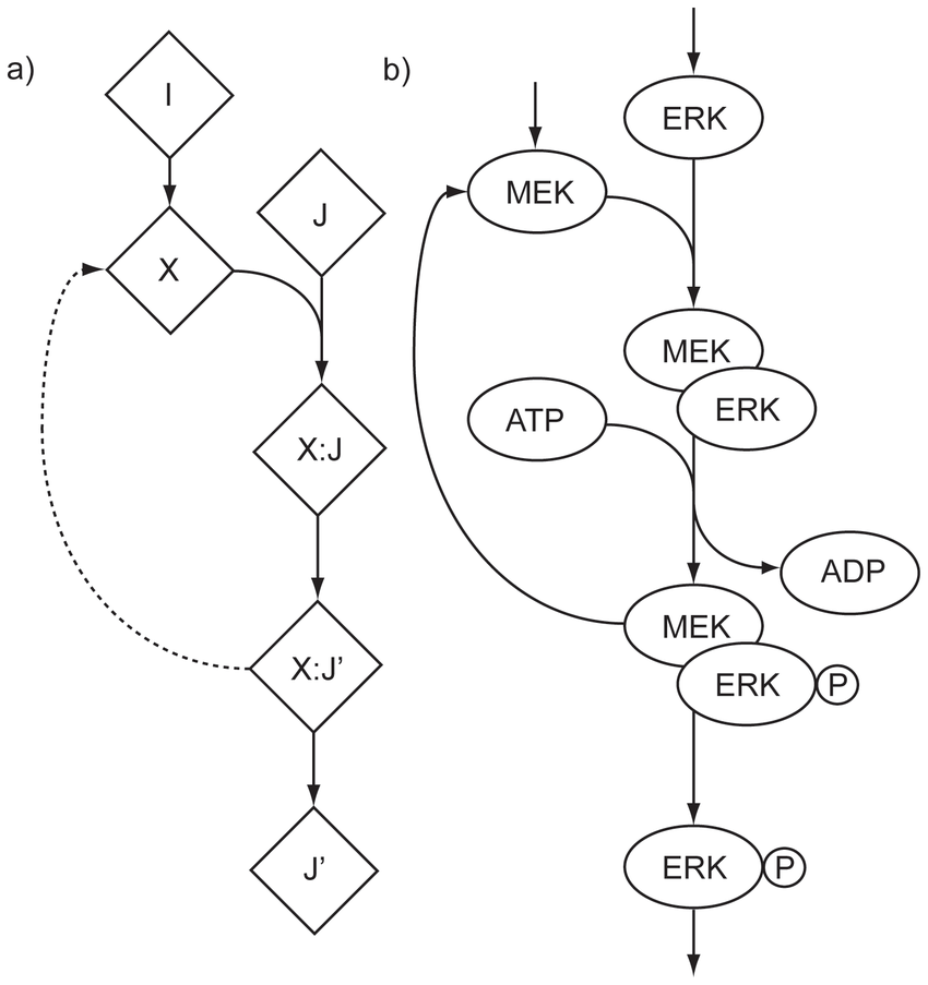 850x903 Logical Loop Structure, With Example From Reactome. A)