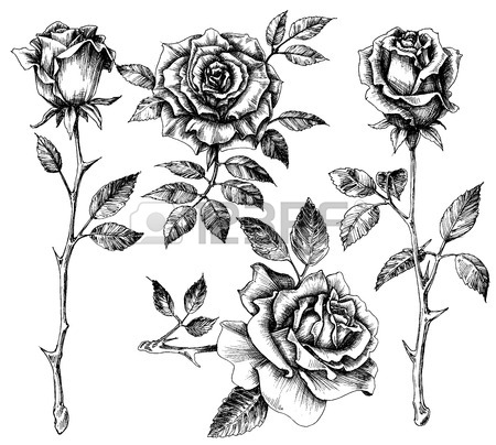 450x404 Hand Drawn Flower Set, Rose Collection Royalty Free Cliparts