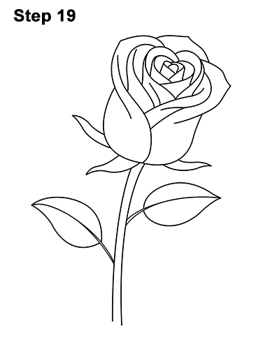 386x500 How To Draw A Rose