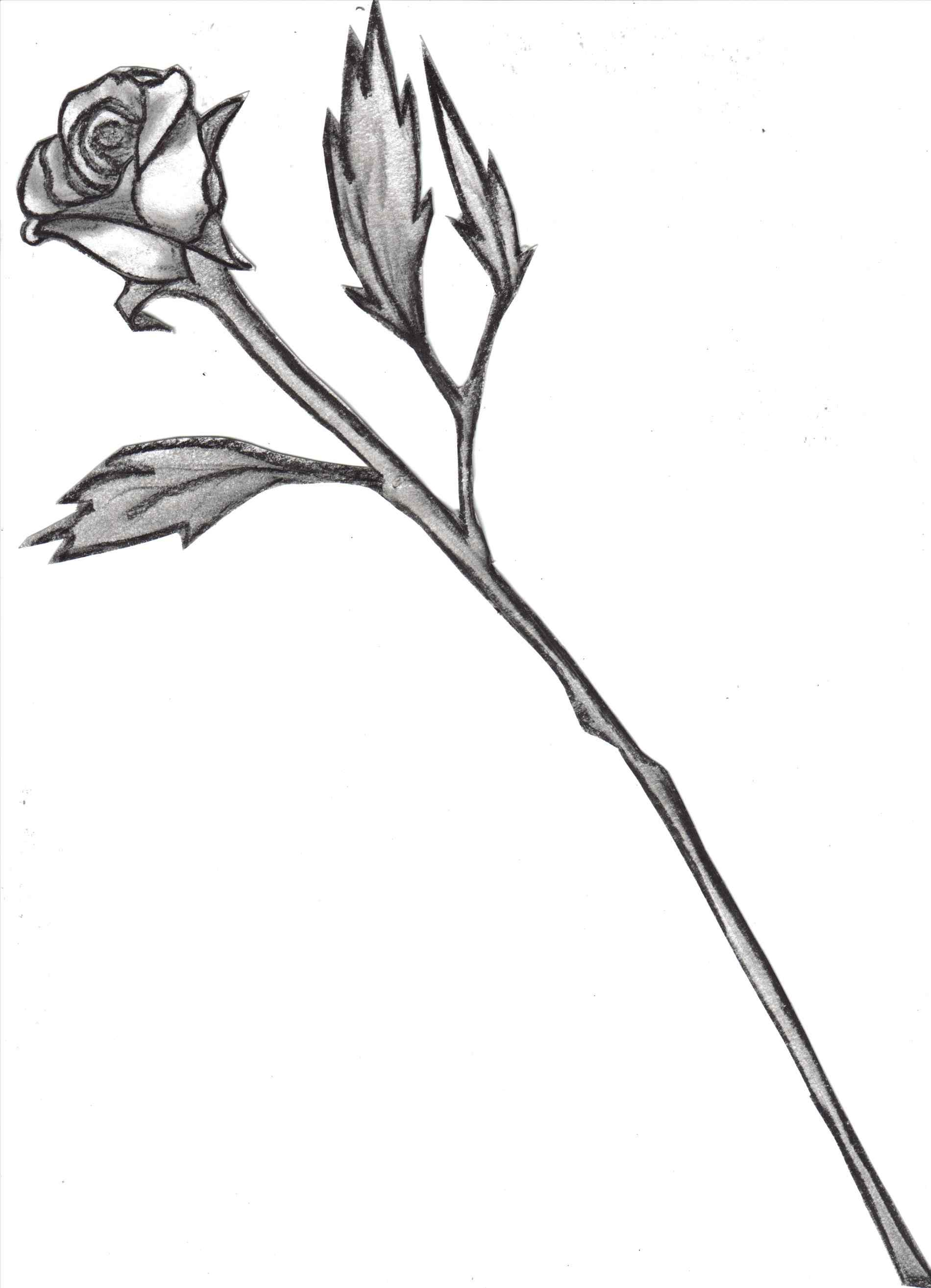 1900x2626 Long Stem Rose Drawing