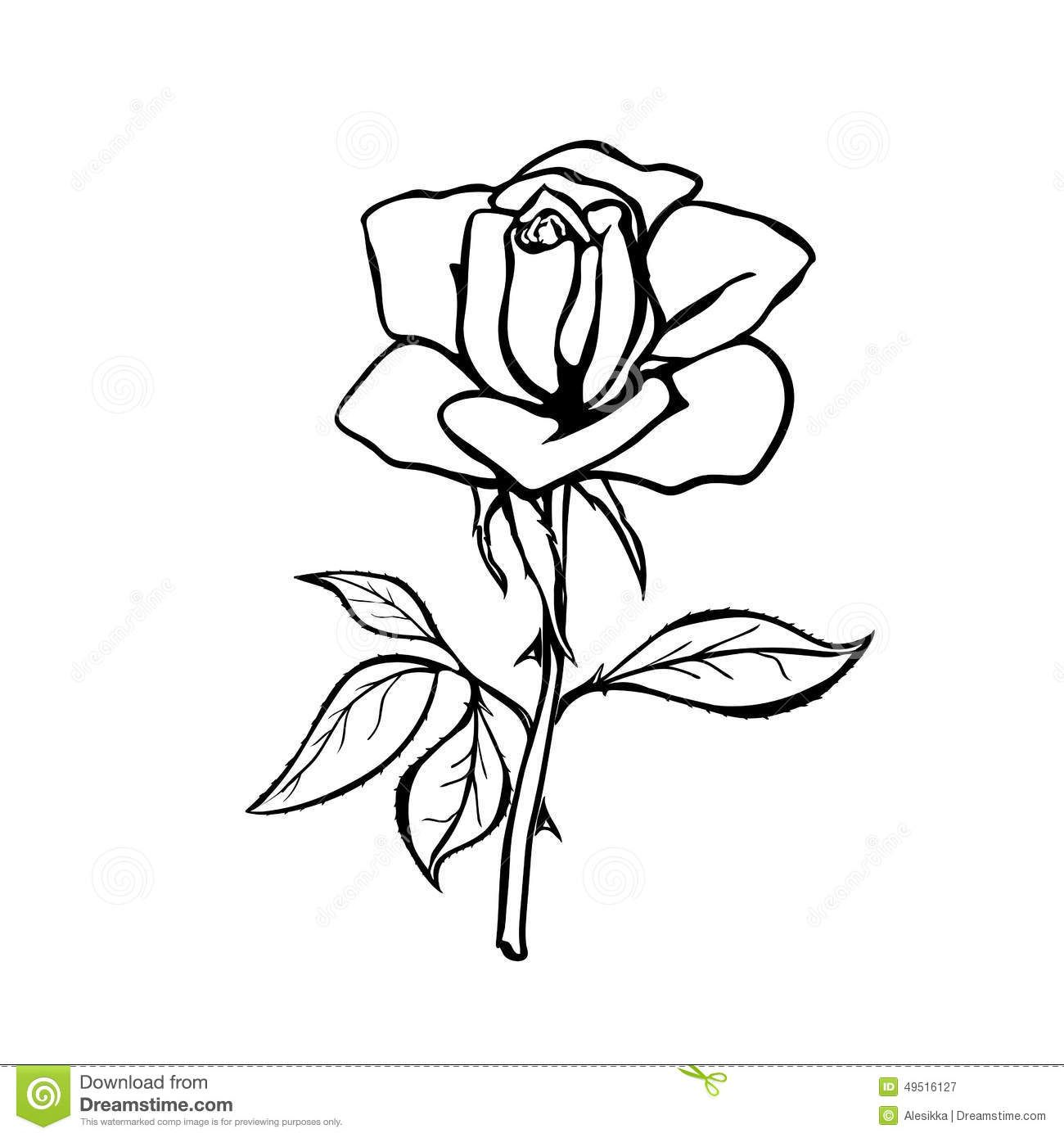 1300x1390 Realistic Rose Drawing Outline Drawing Rose