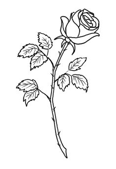 236x345 Rose Drawing Single Flower Outline Tattoo Stencil Just Free