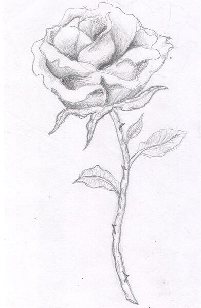 391x600 Rose Tattoo Designs