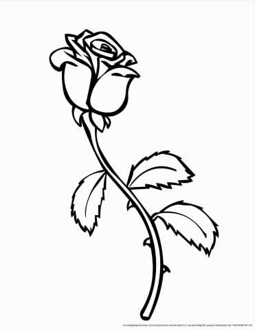 371x480 Simple Rose Drawing Outline With Stem