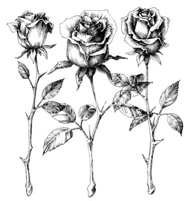 380x400 Single Roses Drawing Set Vector On Vectorstock Tattoos