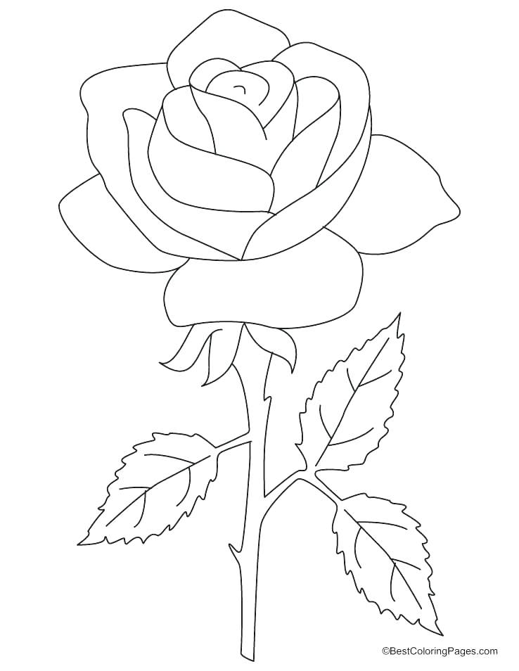 738x954 Coloring Roses To Draw Blue Rose Color Pencil Drawing How Stem