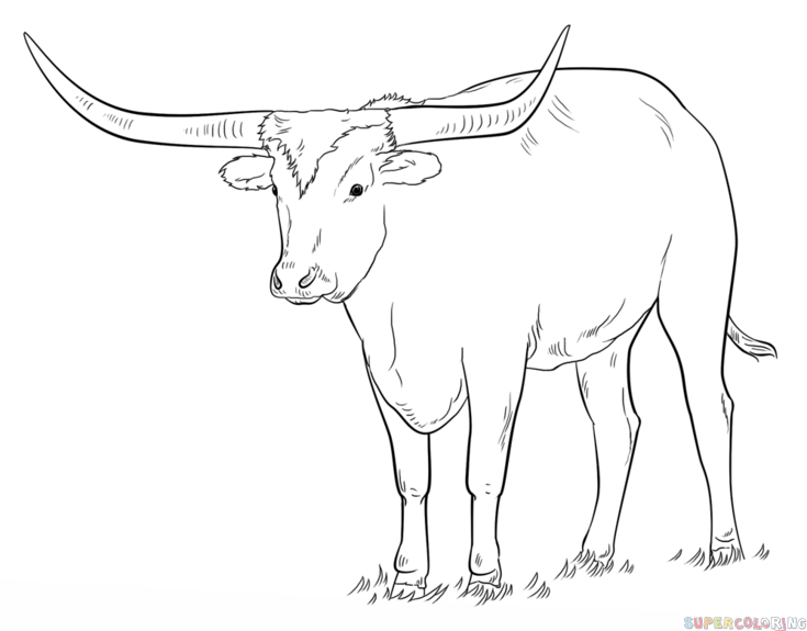 735x575 How To Draw A Longhorn Step By Step. Drawing Tutorials For Kids