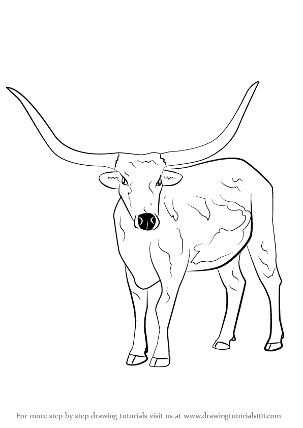 596x842 Learn How To Draw A Longhorn Cattle (Farm Animals) Step By Step