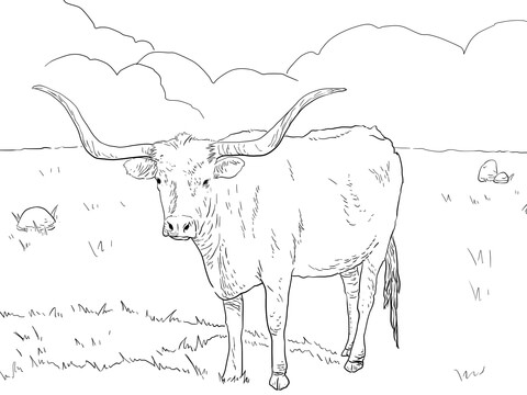 480x360 Texas Longhorn Cow Coloring Page Free Printable Coloring Pages