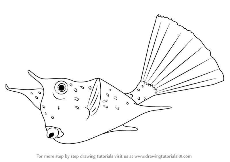 800x566 Learn How To Draw A Longhorn Cowfish (Fishes) Step By Step