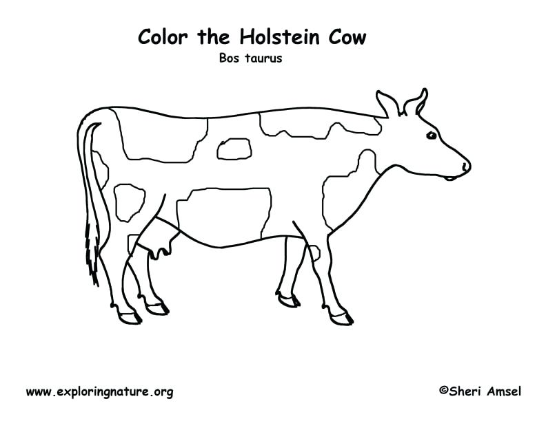 792x612 Pretty Cow Coloring Pages Crayola Photo Cattle Drawn Page 3