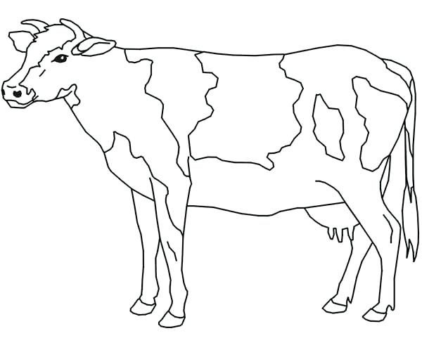 600x481 Coloring Pages Of Cows Synthesis.site