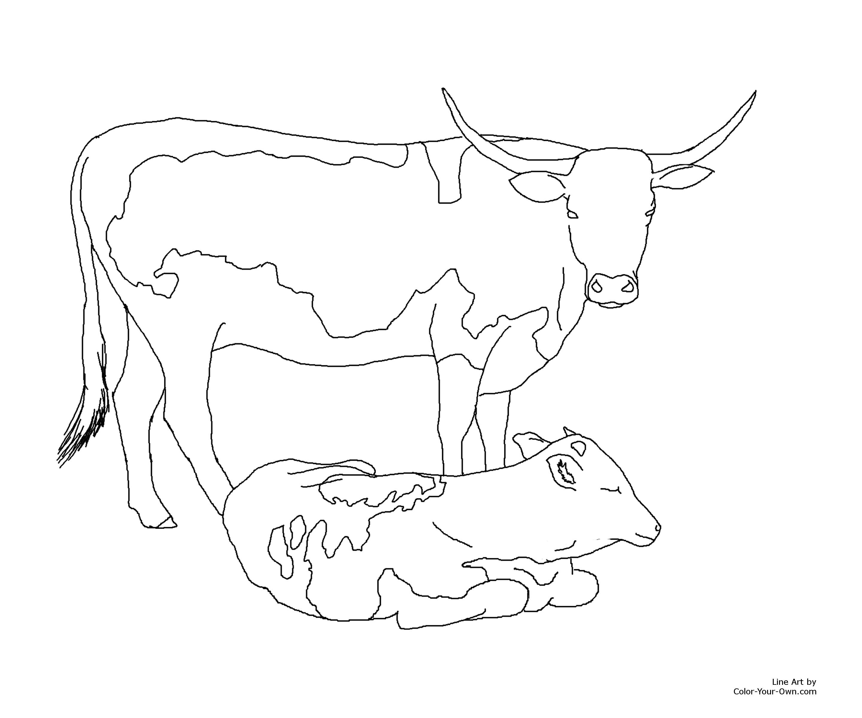 Longhorn Cattle Drawing at GetDrawingscom Free for personal use
