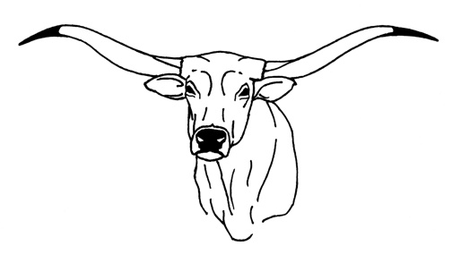 Longhorn Drawing At Getdrawings Com Free For Personal Use