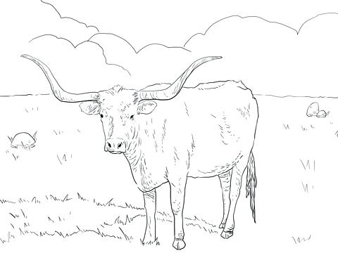 480x360 Texas Longhorns Coloring Pages Longhorn Cow Texas Longhorn