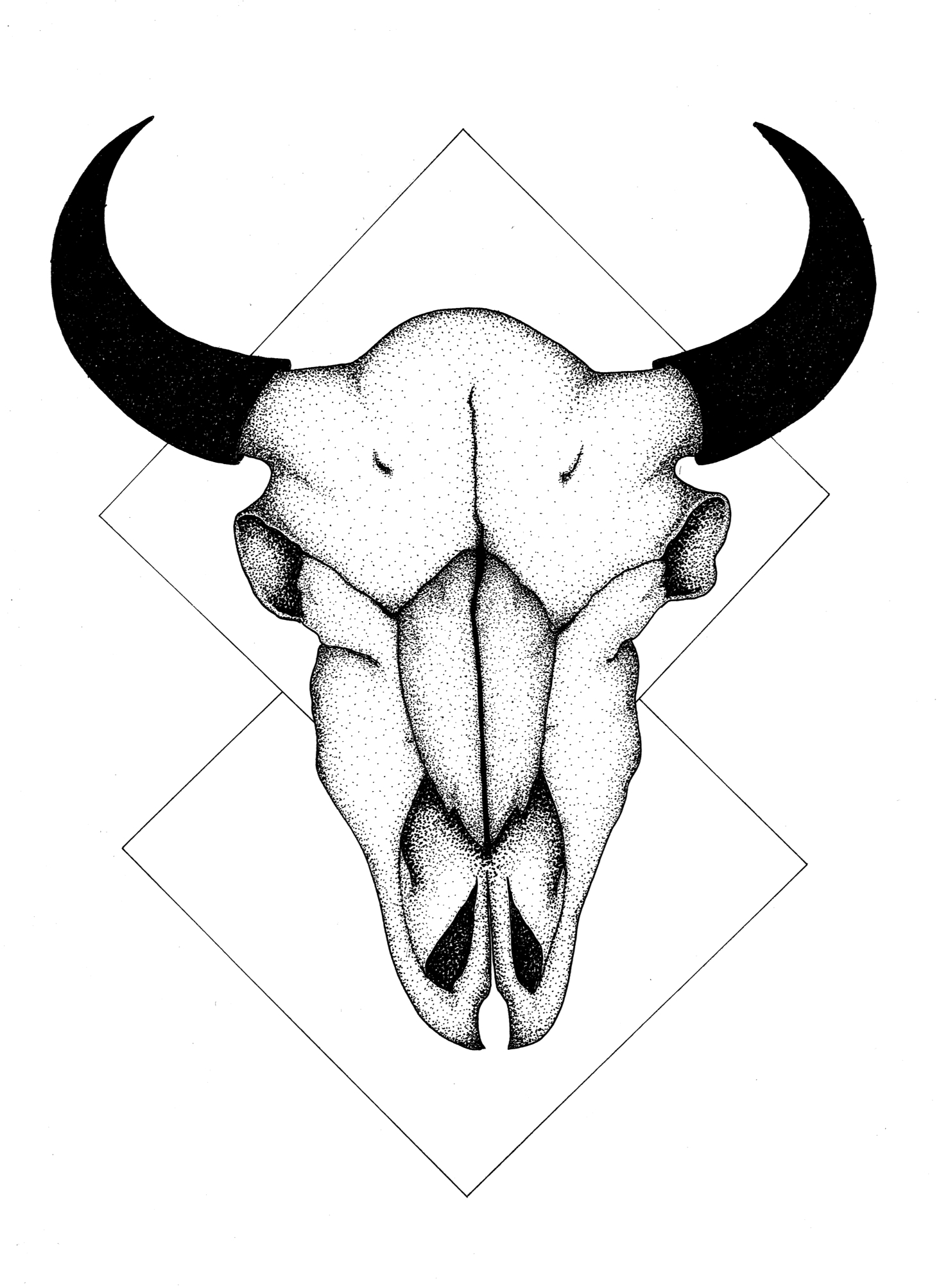 1463x2007 One Piece In A Series Of Animal Skulls, Experimenting