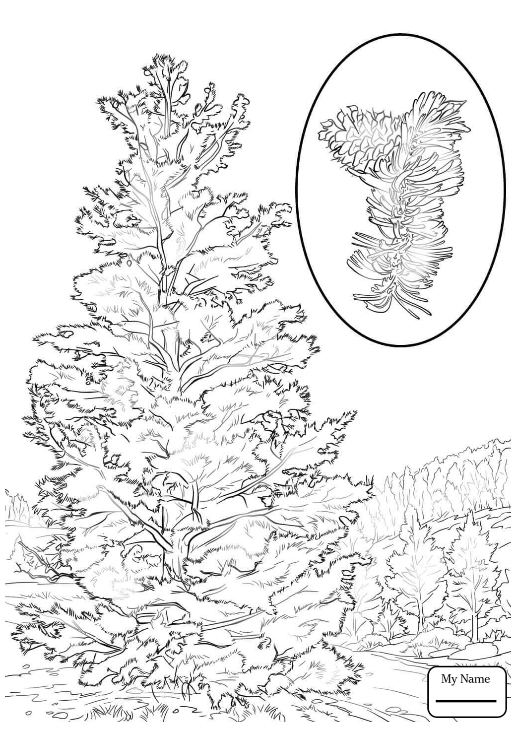 1040x1469 Coloring Pages Trees Leaves Longleaf Pine Pine Trees