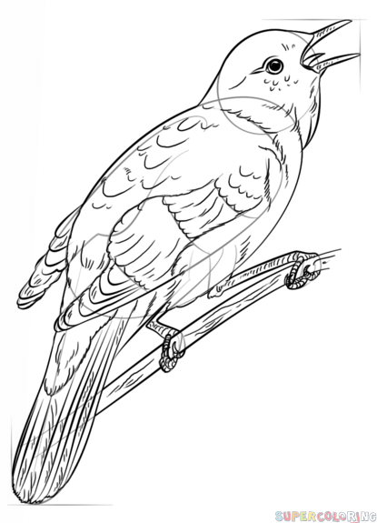 415x575 How To Draw A Nightingale Step By Step Drawing Tutorials
