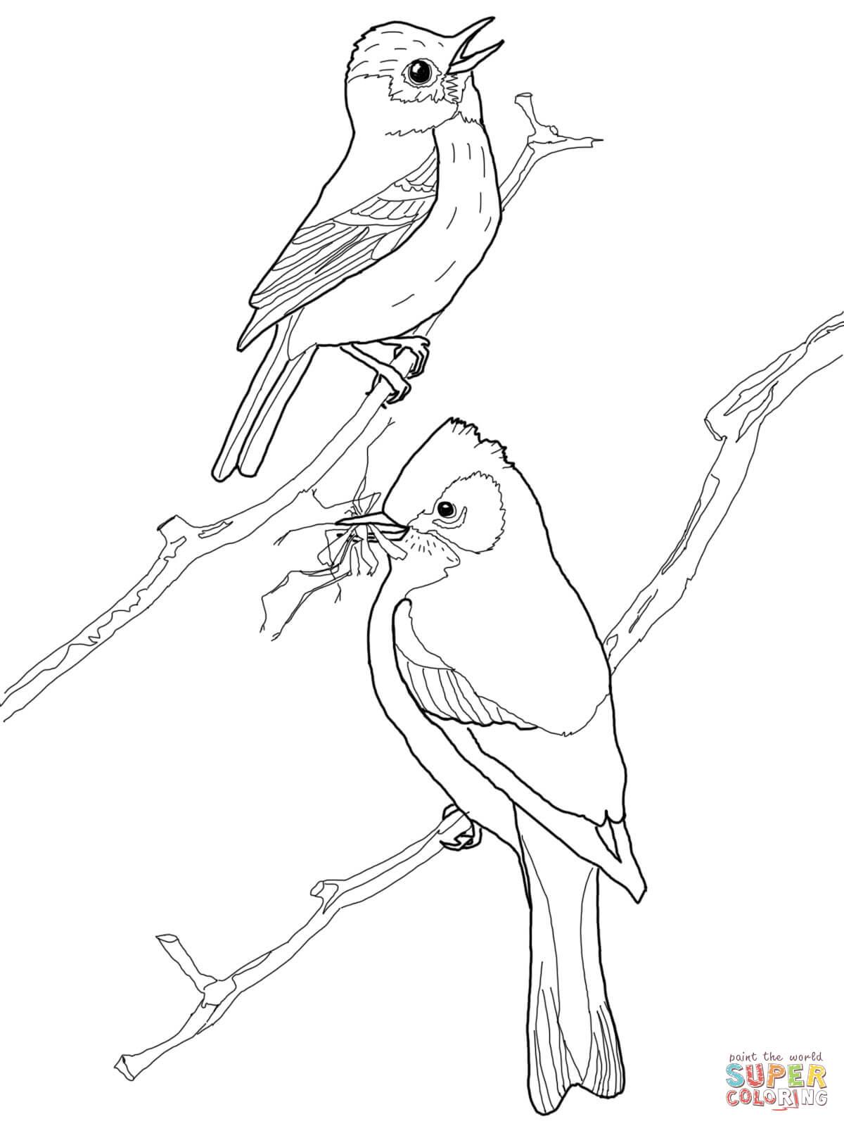 Loon Drawing at GetDrawings