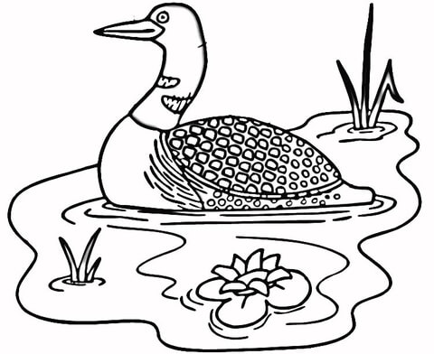 480x392 Loon In The Lake Coloring Page Free Printable Coloring Pages