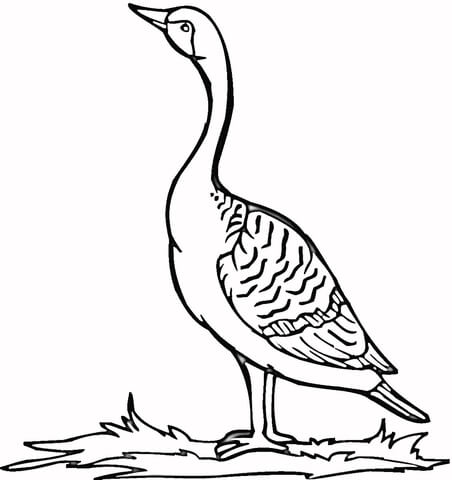 452x480 Loon On The Grass Coloring Page Free Printable Coloring Pages