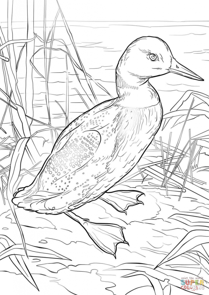Loon Drawing at GetDrawings