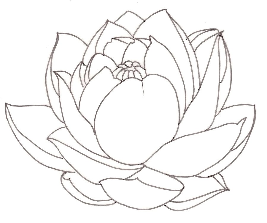 900x750 Drawn Lotus Closed