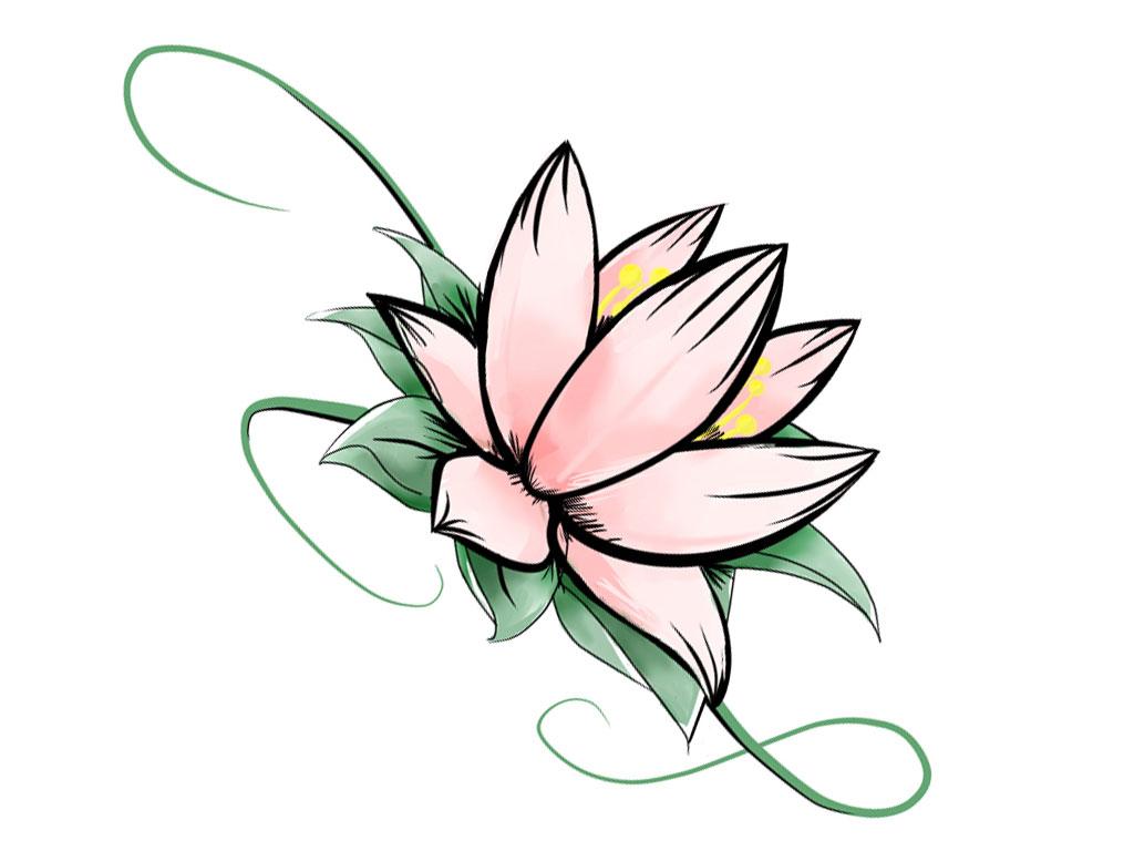 1024x768 Lotus Sketch Photo Step By Step Lotus Sketch Colourful Stepstep