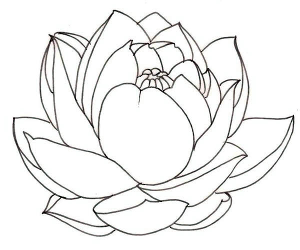 600x500 Drawn Lotus For Kid Flower