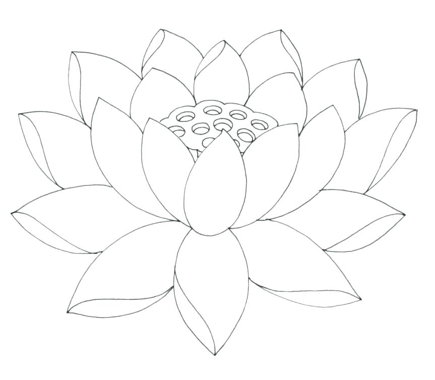 863x754 Lotus Flower Coloring Page Fully Bloom Pages