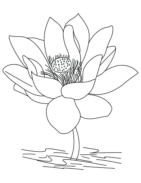 Lotus flower drawing color at free for for Lotus flower coloring pages free
