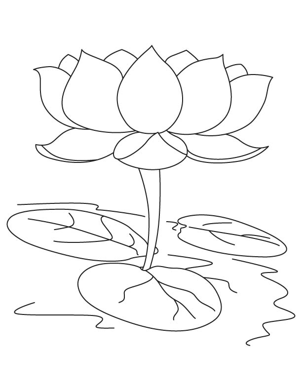 612x792 Sacred Lotus Coloring Page Download Free