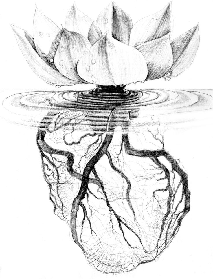 Lotus flower drawing images at getdrawings free for personal 736x962 download heart tattoo anatomical mightylinksfo
