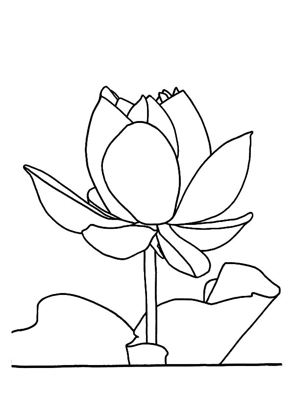 Lotus flower drawing outline at getdrawings free for personal 600x849 lotus flower outline coloring pages batch coloring mightylinksfo