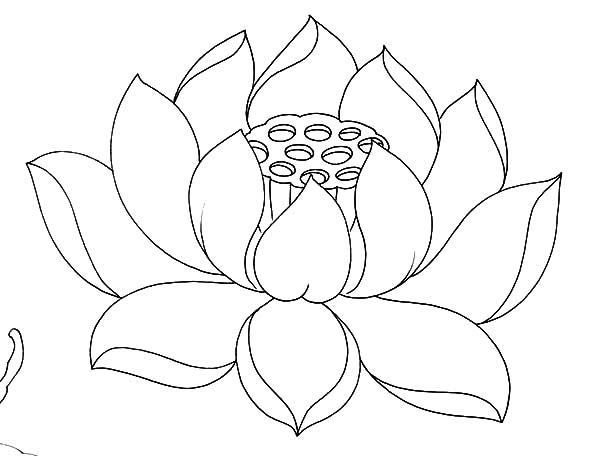 Lotus flower drawing outline at getdrawings free for personal 600x456 small lotus flower outline archives mightylinksfo