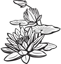 236x248 How To Draw A Lotus Flower Water Lily Projects On My To Do List