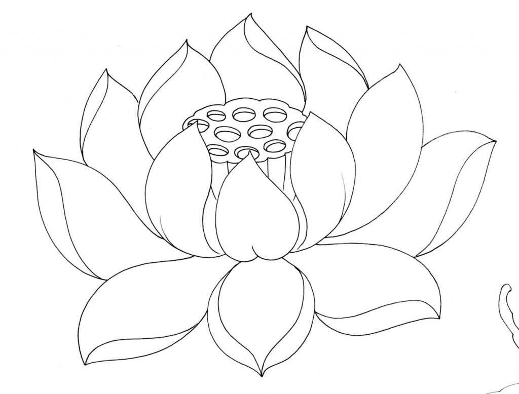 Lotus flower drawing sketch at getdrawings free for personal 1024x778 lotus flower drawing sketch 129 best watercolor lotus images on mightylinksfo