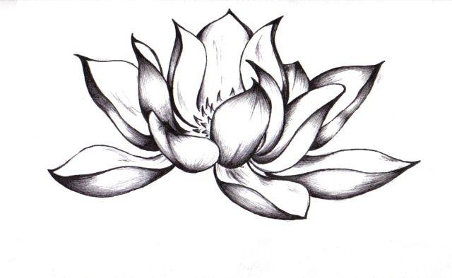 640x394 Lotus Flower Drawing Sketch Pictures Of Lotus Flower Drawings