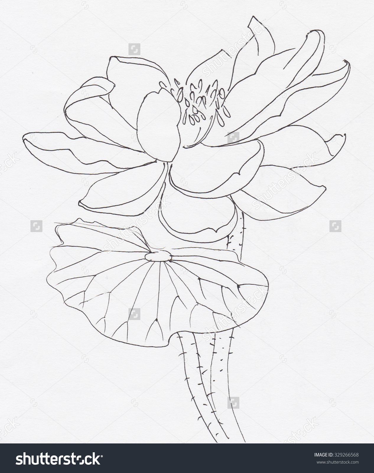 lotus flower drawing sketch at getdrawingscom free for