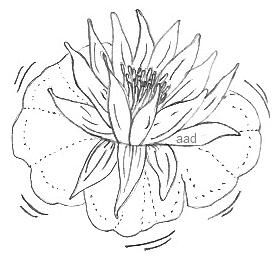 277x256 Lotus Flower Easy Image To Trace Or Draw Drawings Amp Sketches